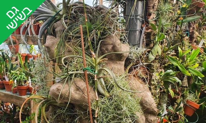 8 סדנת הכנת טרריום עם צמחים אקזוטיים - אקווה טרה ג'ונגל, פתח תקווה