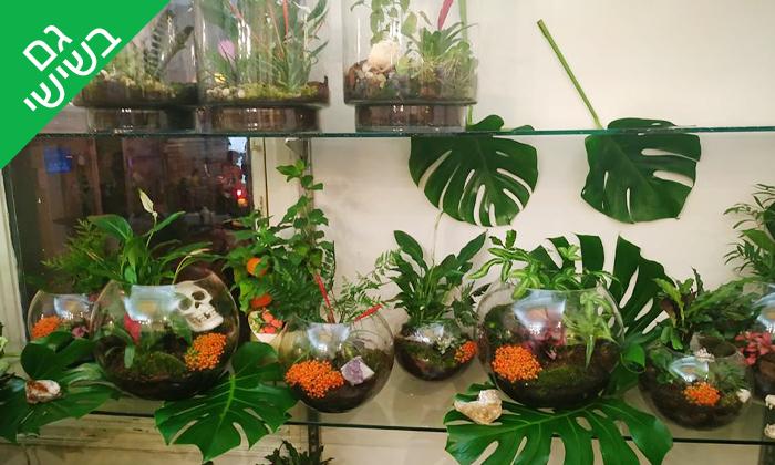 3 סדנת הכנת טרריום עם צמחים אקזוטיים - אקווה טרה ג'ונגל, פתח תקווה