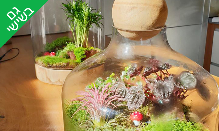 10 סדנת הכנת טרריום עם צמחים אקזוטיים - אקווה טרה ג'ונגל, פתח תקווה