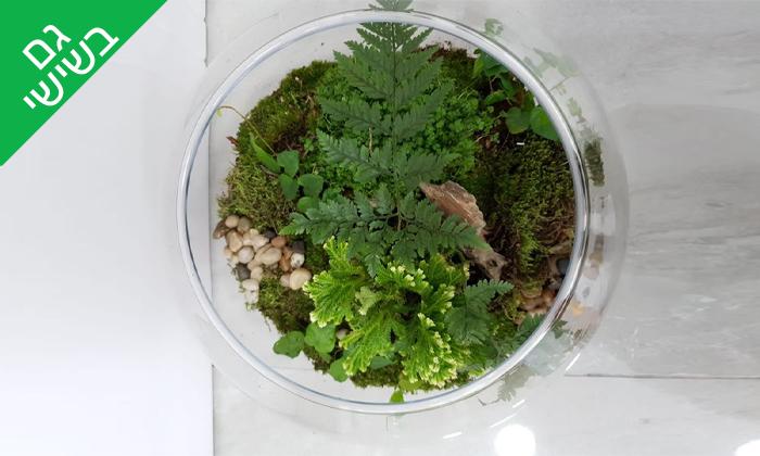 6 סדנת הכנת טרריום עם צמחים אקזוטיים - אקווה טרה ג'ונגל, פתח תקווה