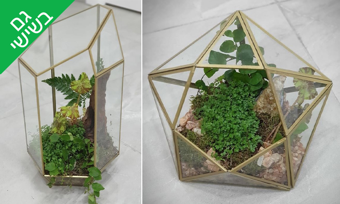 4 סדנת הכנת טרריום עם צמחים אקזוטיים - אקווה טרה ג'ונגל, פתח תקווה