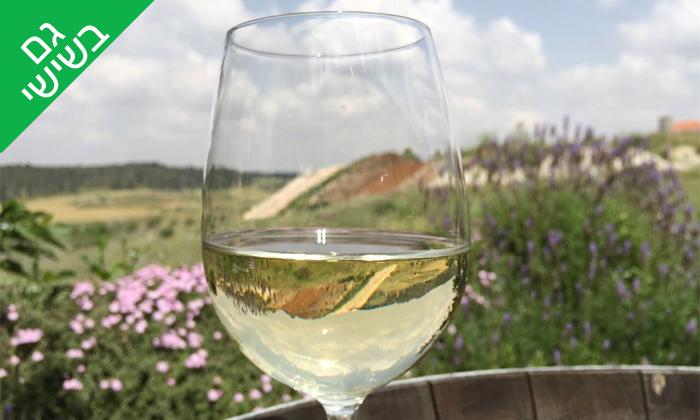 14 סיור וטעימות יין ביקב קדמא, כפר אוריה