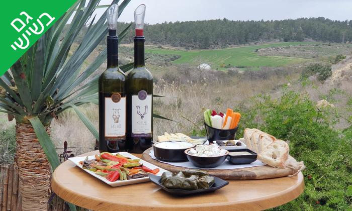 9 סיור וטעימות יין ביקב קדמא, כפר אוריה