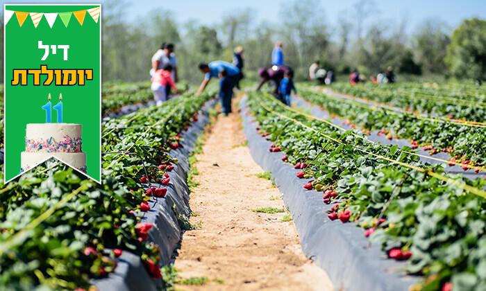 3 קטיף תותים ב'תות בשדה - משק אריאל', קדימה