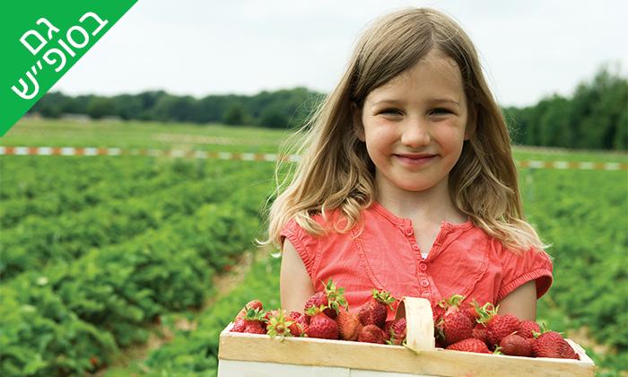 2 קטיף תותים בתותלאנד - משק טל, הוד השרון