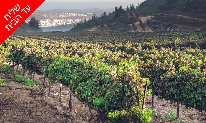 7 מארז 6 בקבוקי יין כשרים למהדרין במשלוח חינם וסיור זוגי ביקב גוש עציון