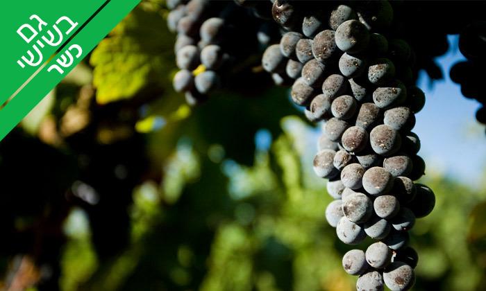 5 ביקור וטעימות יין ביקב טורא ביישוב רחלים