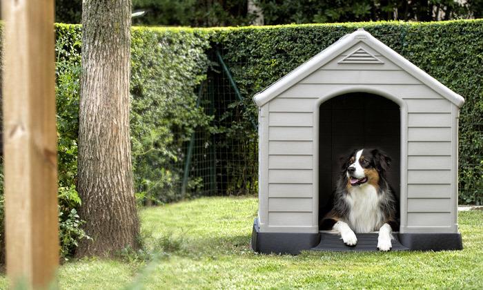 6 כתר: מלונה לכלב דגם DOG HOUSE