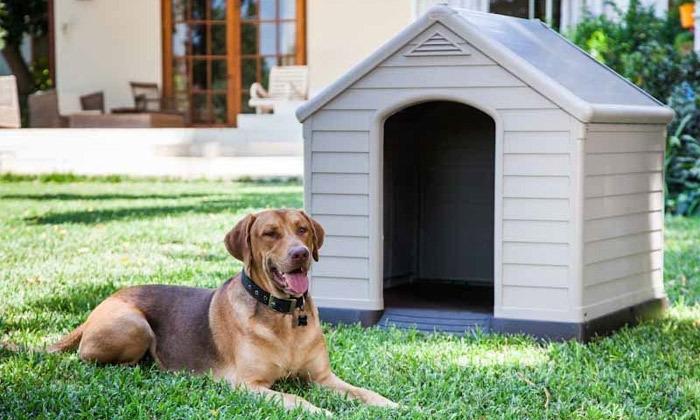5 כתר: מלונה לכלב דגם DOG HOUSE