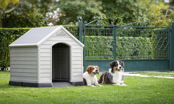 4 כתר: מלונה לכלב דגם DOG HOUSE