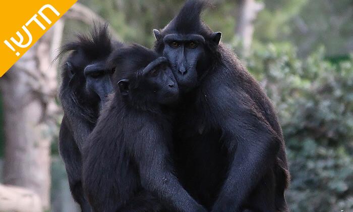 6 מקלט הקופים הישראלי - פסטיבל לכל המשפחה ביער בן שמן