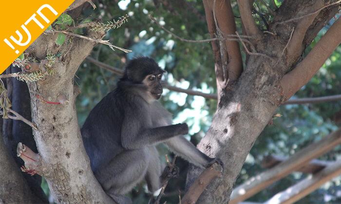 9 מקלט הקופים הישראלי - פסטיבל לכל המשפחה ביער בן שמן