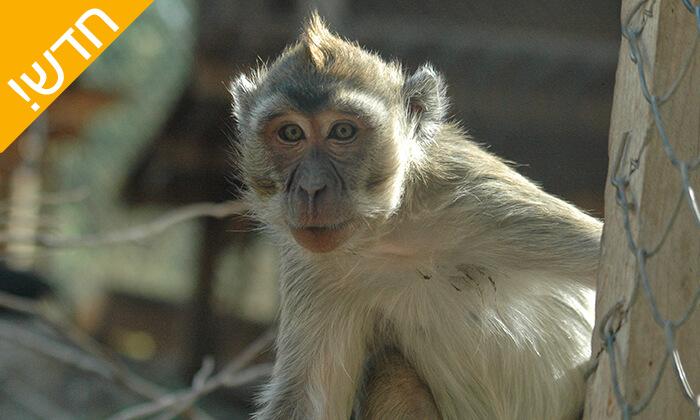 12 מקלט הקופים הישראלי - פסטיבל לכל המשפחה ביער בן שמן