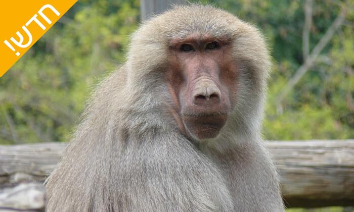 8 מקלט הקופים הישראלי - פסטיבל לכל המשפחה ביער בן שמן