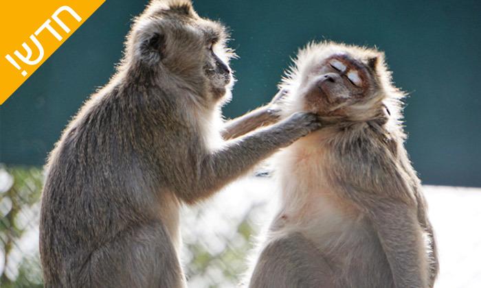 3 מקלט הקופים הישראלי - פסטיבל לכל המשפחה ביער בן שמן