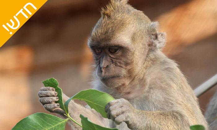 10 מקלט הקופים הישראלי - פסטיבל לכל המשפחה ביער בן שמן