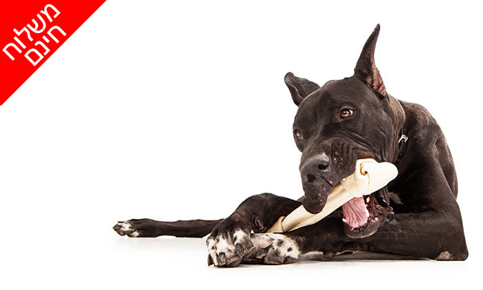 6 שני מארזים של עצם קשר לבנה לכלב KAZOO - משלוח חינם
