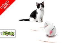 כדור משחק לחתול