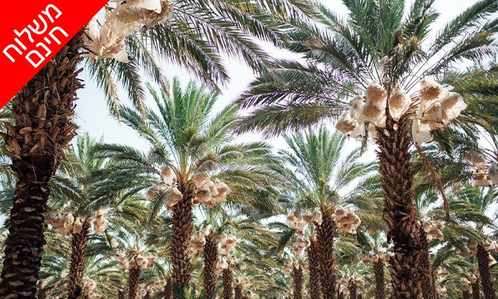 3 מארז תמרים מהמג'הוליות בבקעת הירדן - משלוח עד הבית ברחבי הארץ