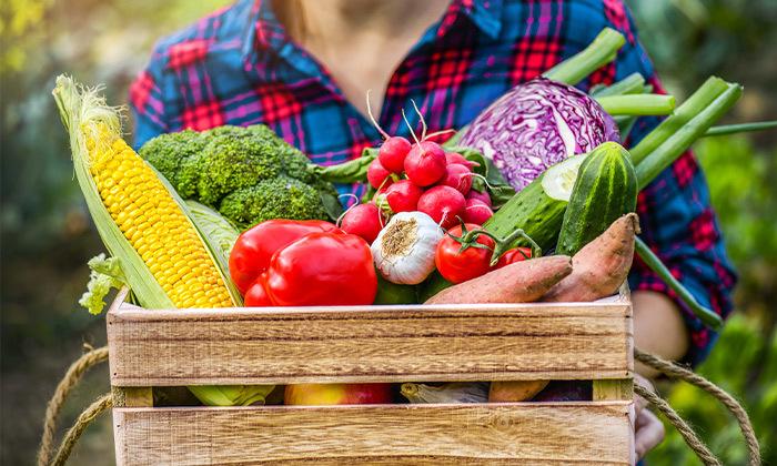 2 מארז ירקות מ'קטיף של בוקר' במשלוח חינם עד הבית למרכז