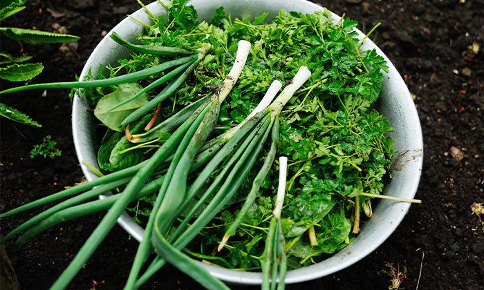 3 מארז ירקות מ'קטיף של בוקר' במשלוח חינם עד הבית למרכז