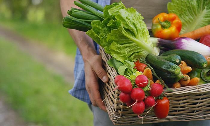 4 מארז ירקות מ'קטיף של בוקר' במשלוח חינם עד הבית למרכז