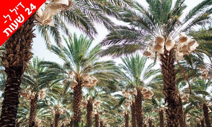 5 דיל ל-24 שעות: מארז תמרים מהמג'הוליות בבקעת הירדן - משלוח עד הבית ברחבי הארץ
