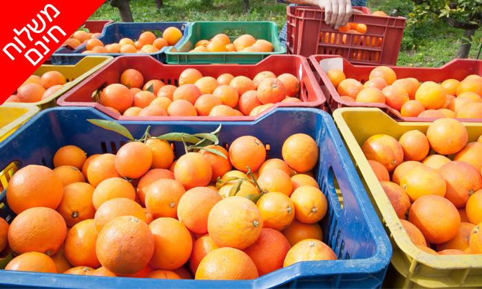 4 מהפרדס אליכם הביתה: מארז פירות הדר מ'קטיף של בוקר' כולל משלוח חינם ליישובי המרכז