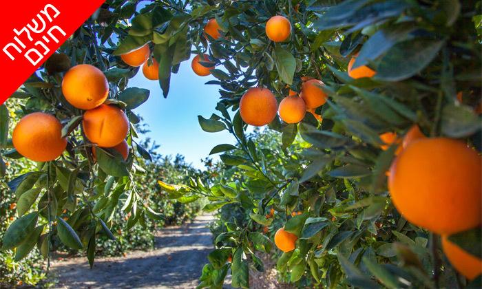 2 מהפרדס אליכם הביתה: מארז פירות הדר מ'קטיף של בוקר' כולל משלוח חינם ליישובי המרכז