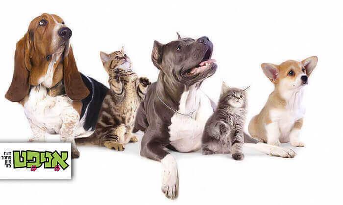 רשת אניפט: 50 ₪ לשובר הנחה בשווי 100 ₪ לרכישת חטיפים ועצמות לכלבים וחתולים