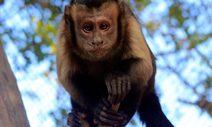 4 גן וחיות דגניה, בקיבוץ דגניה