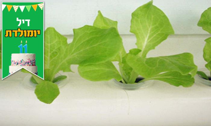 5 דיל לזמן מוגבל: ערכת גידול הידרופוני לגידול ירקות בבית