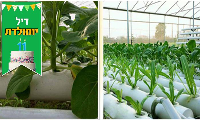6 דיל לזמן מוגבל: ערכת גידול הידרופוני לגידול ירקות בבית