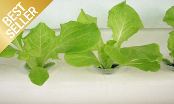 5  ערכת גידול הידרופוני לגידול ירקות בבית