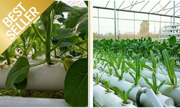 6  ערכת גידול הידרופוני לגידול ירקות בבית