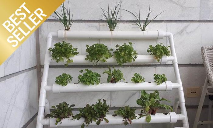 2  ערכת גידול הידרופוני לגידול ירקות בבית