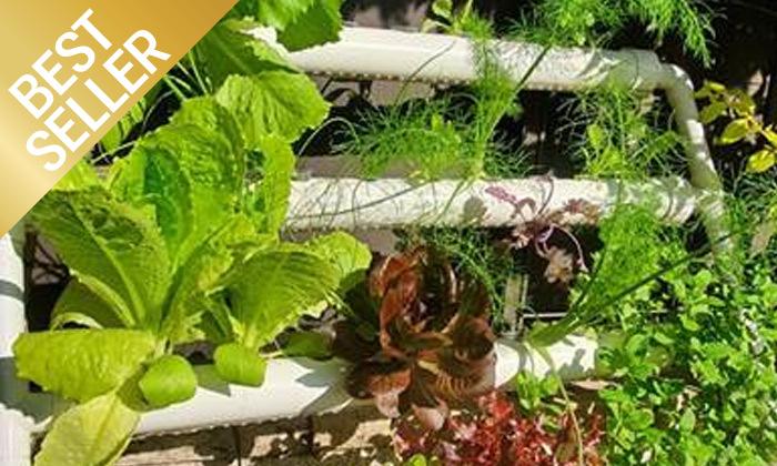 10  ערכת גידול הידרופוני לגידול ירקות בבית