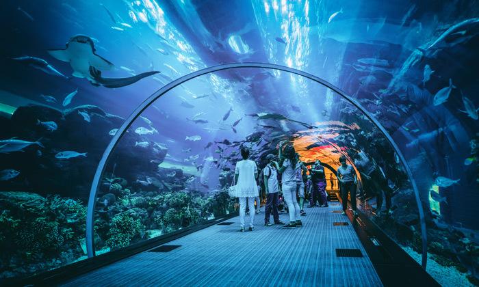 12 חדש ב-GROO: נופש בדובאי כולל טיסות ישירות ומלון, גם בחנוכה