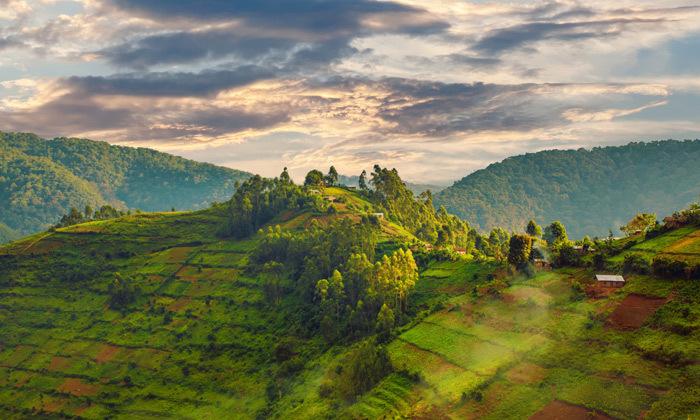 4 טיול מאורגן לרואנדה: טיסות, 7 לילות , פנסיון מלא וסיורים