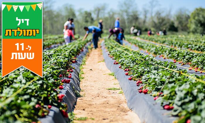 3 דיל ל-11 שעות: קטיף תותים ב'תות בשדה - משק אריאל', קדימה