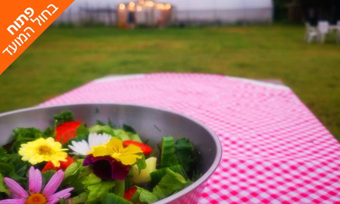 10 קטיף ירקות עם שק ירקות לקחת הביתה - משק הכוכבים בורגתה