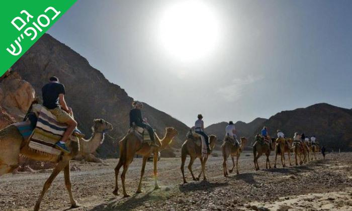 """2 טיול גמלים משפחתי כולל אירוח בדואי מסורתי ב'חוות הגמלים', גם בסופ""""ש"""