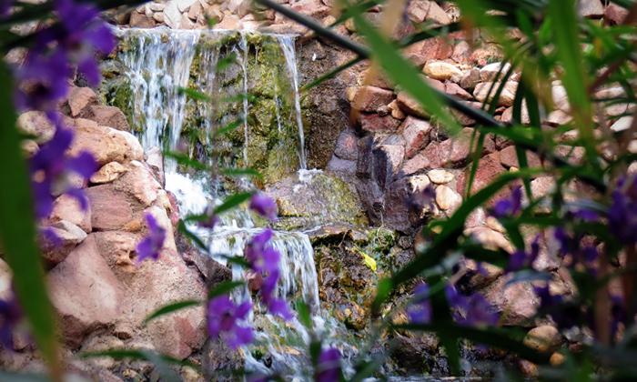"""4 הגן הבוטני באילת - גם בסופ""""ש"""