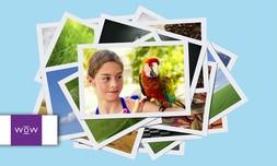 פיתוח 100 תמונות באתר WOW