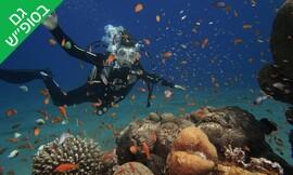 צלילה באתר המערות מועדון Palma