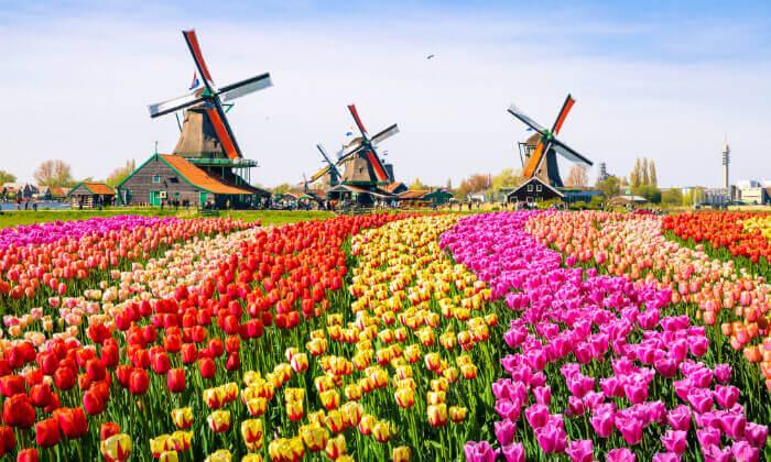 2 חופשה משפחתית בהולנד, כולל יולי-אוגוסט וראש השנה