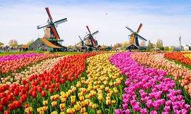 חופשה משפחתית בהולנד כולל חגים