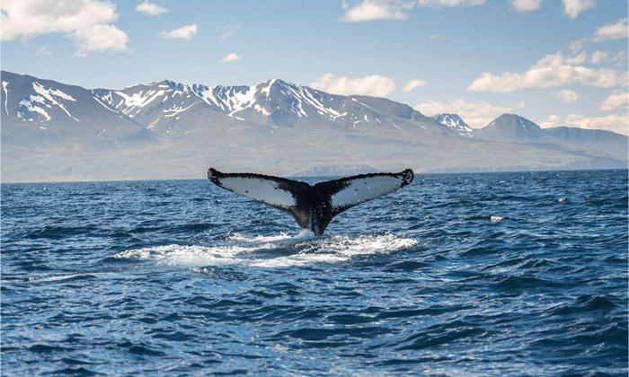 3 טיול מאורגן באוגוסט לאיסלנד: 9/10 ימים באי של קרח, אש ונופים