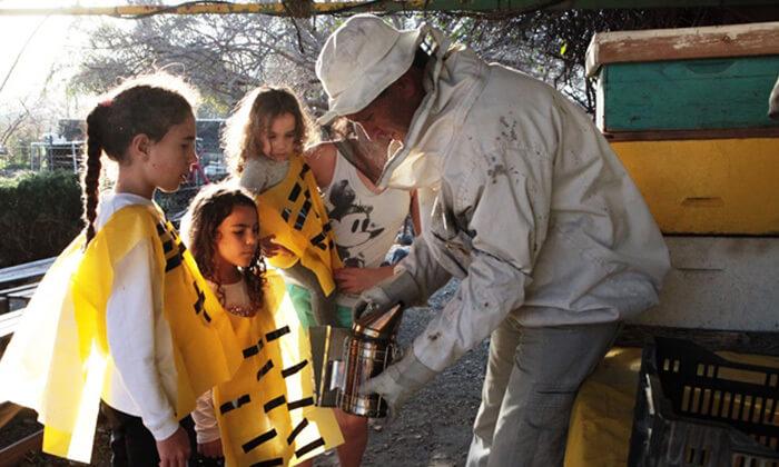 2 דבורת התבור - מרכז מבקרים כפרי