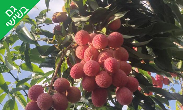 3 להתאהב בטבע: קטיף ליצ'י ופינת חי - קיבוץ מצובה בגליל המערבי